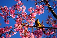 Fågel och blomning Fotografering för Bildbyråer