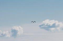 Fågel och fluffiga moln Arkivbild