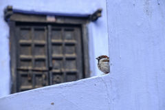 Fågel och gammal dörr Royaltyfri Foto