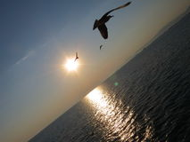 Fågel och hav arkivbilder