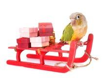 Fågel och jul Arkivbild