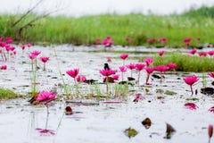 Fågel och lotusblomma Arkivbild