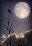 Fågel och måne Arkivbild