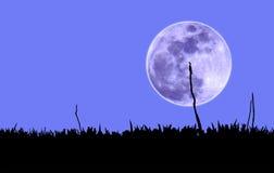 Fågel och måne Arkivfoto