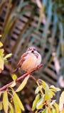 Fågel och mandel Royaltyfri Fotografi