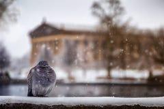 Fågel och Parthenon Royaltyfri Fotografi
