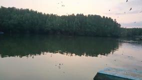 Fågel och skog Arkivfoton