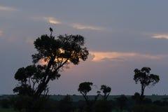 Fågel och träd silhouetted på solnedgången Arkivbilder