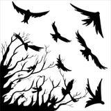 Fågel och Tree Royaltyfria Bilder