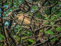 Fågel och Tree royaltyfri fotografi