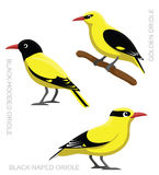 Fågel Oriole Set Cartoon Vector Illustration Royaltyfri Fotografi