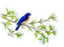 Fågel på äppleträd tecknade handillustrationer Arkivfoto