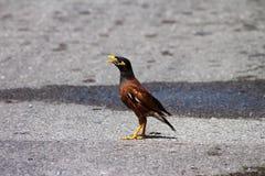 Fågel på asfalt Arkivbild