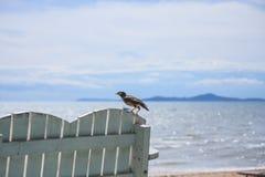 Fågel på bänk vid stranden Royaltyfri Foto