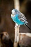 Fågel på bambu Royaltyfria Bilder