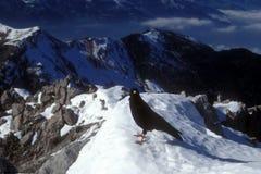 Fågel på berg Arkivfoto