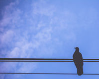 Fågel på blå himmel Royaltyfri Fotografi