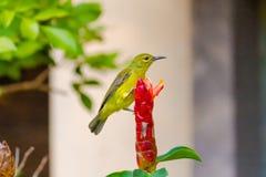 Fågel på blomman arkivfoto