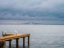 Fågel på bryggan med bron i avståndet Royaltyfria Foton