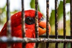 Fågel på bur royaltyfria foton
