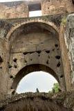 Fågel på coliseumen, Rome, Lazio, Italien Royaltyfri Foto
