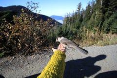 Fågel på cypressberget, Vancouver, Kanada Fotografering för Bildbyråer