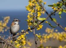 Fågel på den gula blomningen Arkivfoto
