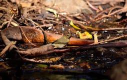 Fågel på den våta jorden Arkivfoto