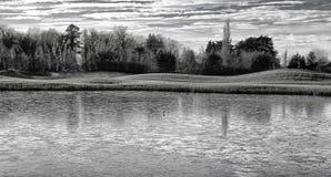 Fågel på det djupfrysta dammet, Dublin, Irland royaltyfri fotografi