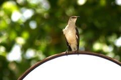 Fågel på en avspegla Arkivbild