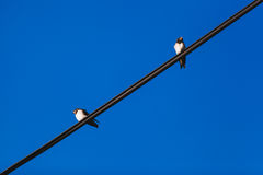 Fågel på en binda Arkivfoton