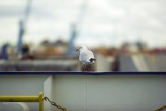 Fågel på en boart Royaltyfri Fotografi