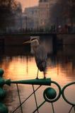 Fågel på en brigde i amsterdaam royaltyfria foton