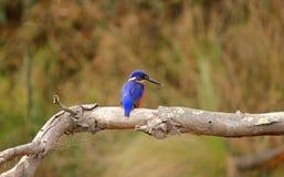 Fågel på en förgrena sig royaltyfria bilder