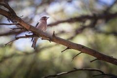Fågel på en filial i skogen Arkivbilder