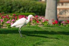 Fågel på en lawn royaltyfria foton