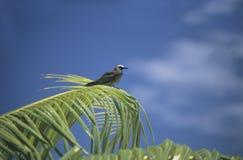 Fågel på en palmträd i Polynesien Royaltyfria Bilder