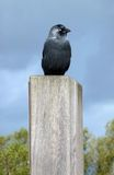 Fågel på en pelare Royaltyfri Bild