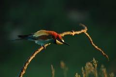 Fågel på en pinne Arkivbild