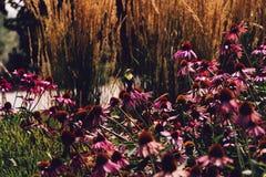 Fågel på en rosa blomma arkivfoton