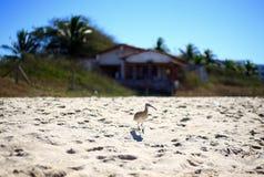 Fågel på en sandig strand Arkivbilder