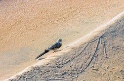 Fågel på en sandig strand Arkivfoto