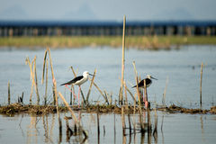 Fågel på en sjö Royaltyfri Fotografi