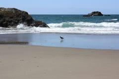 Fågel på en strand Fotografering för Bildbyråer