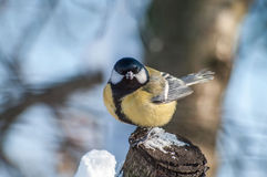 Fågel på en stubbe Royaltyfria Bilder