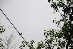 Fågel på en telefontråd Royaltyfri Bild