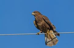 Fågel på en tråd Arkivfoton