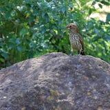 Fågel på en vagga Fotografering för Bildbyråer
