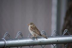 Fågel på ett staket arkivbild