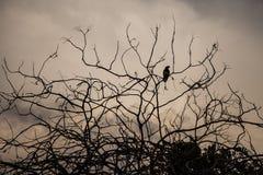Fågel på ett torrt träd med moln i bakgrunden Royaltyfri Bild